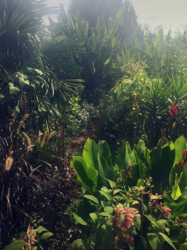 En solo à la conception et réalisation de ce jardin en permaculture en éclosion aux Philippines.